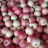 138-198# Red Gala Apple with 20kg Carton
