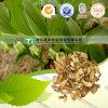 Natural Herbal Medicine Radix Polygonati Officinalis