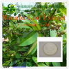 High Quality Corosolic Acid Banaba Leaf Extract