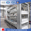 Automatic H Type Layer Chicken Cage System in India