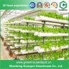 Commercial Greenhouse a Type Vertical Hydroponics Grow Kit