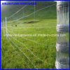 Wholesale Cheap Price Deer Fence / Cattle Fence / Farm Fence