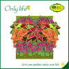Onlylife Economical Vertical Wall Planter Hanging Planter in Many Colors