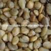 Polished Natural Yellow Pebble Stone for Garden Decoration