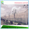 Multi Span Greenhouse in Plastic Film Cover