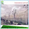 Multi Span Greenhouse in Plastic Film Cover