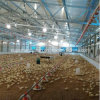 Custermized Poultry Farm Construction with Steel Structure