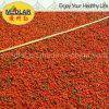 Medlar Organic Dried Goji Berry Dried Wolfberry