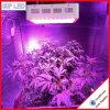 Wholesale 1200W LED Grow Lights for Microgreens