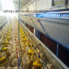 Prefabricated Poultry Control House with Full Set Automatic Poultry Farm Equipment