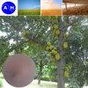 Plant Source Amino Acid Iron Chelation for Fertilizer