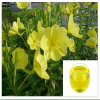 a Good Sale Beauty Massage Oil of Evening Primrose Oil