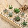 Wood Box for Plants & Flowers