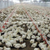 Full Set High Quality Poultry Equipment for Broiler