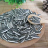 New Crop Sunflower Seeds From Shandong Guanghua