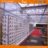 Durable Polycarbonate Sheet Multi-Span Venlo Type Greenhouse