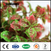 UV Resistant Indoor Artificial Evergreen Leaf Branch