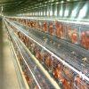 3 -6 Tiers 90-240birds Automatic Chicken Cage for Layer