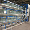 Automatic H Type 3 Tiers Pulletbroiler Cages