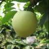 Chinese Fresh Green Emerald Pear