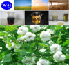 Factory Supply Amino Acid Powder (30%--80%) Foliar Fertilizer