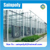 High Quality Large Size Multi-Span Glass Greenhouse