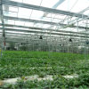 Intelligent Multi Span Glass Greenhouse