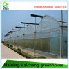 Plastic Film Green House for Mushroom Growing