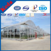 Larger Multi-Span Agricultural Film Greenhouse