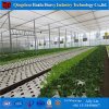 Hydroponics System in Greenhouse for Vegetables