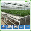 Nft Hydroponics for Lettuce, Cabbage, Herbs, etc Systems