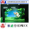 Light Weight P3 Indoor High Definition LED Module Screen Display for Advertisement