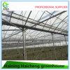 Multi Span Agriculture Plastic Film Vegetable Greenhouse