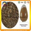 Medicinal Cyathula Root Extract