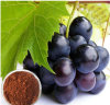 Nutramax Supply-Grape Skin Extract/Red Grape Skin Extract/Grape Skin Extract Powder (XT-FL)