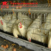 Hot Galvanized Chicken Breeding Farm Machinery Battery Layer Cage with Automatic Equipment