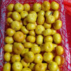 Golde Supplier Sweet Baby Mandarin