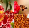 Bee Pollen,King of Pollen,Top Puer Tea Bee Pollen, Rare,Precious, No Antibiotics, No Pesticides, No Pathogenic Bacteria, Anticancer, Health Food, Prolong Life