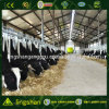 Pre Engineering Low Cost Steel Structure Cowshed (LS-S-021)