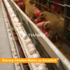 Galvanized Welded Mesh Chicken Cages Laying Hens Used
