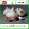 2017 New Crop Garlic Pure White