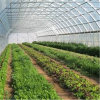 High Quality Multi Span Agricultural Film Greenhouse