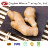 2017 New Crop Fresh Ginger with High Quality