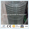 High Quality Galvanized & Welded Wire Mesh