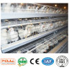 Layer (Egg) Chicken Cages System Equipment