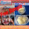 Body Building Intramuscular Steroid Hormone Powder CAS: 10161-34-9 Trenbolone Acetate