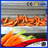 Factory Price Automatic Stainless Steel Potato Washing and Peeling Machine