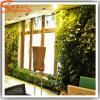 2015 Distinctive Design Artificial Green Grass Wall