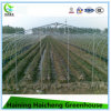 Poly Tunnel Green House From China Manufacturer