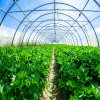 Low Price Agricultural Special Vegetable Greenhouse